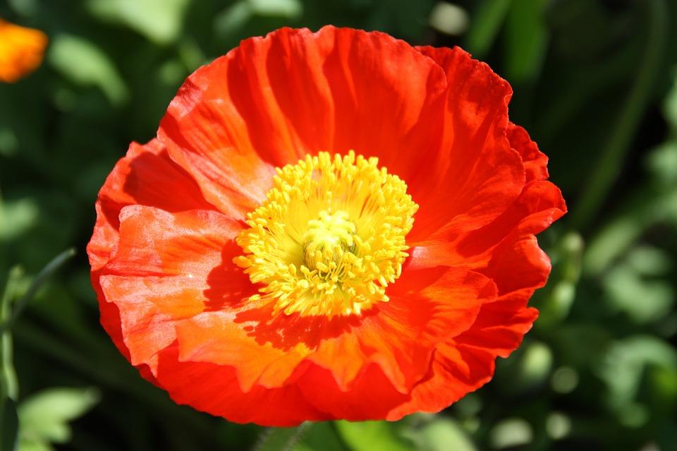 Flower, Spring, Blossom, Bloom, Nature, Close Up, Plant