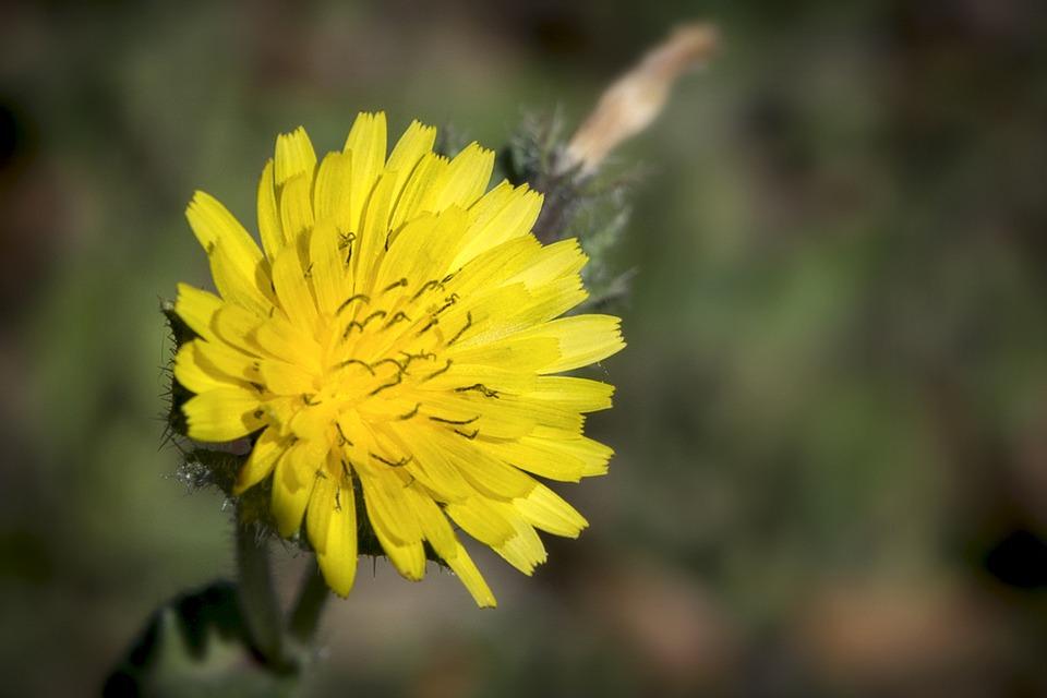 Flower, Yellow, Nature, Summer, Plant, Flora, Beauty