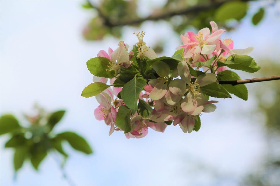 Nature, Flower, Plant, Tree, Freshness, Leaves