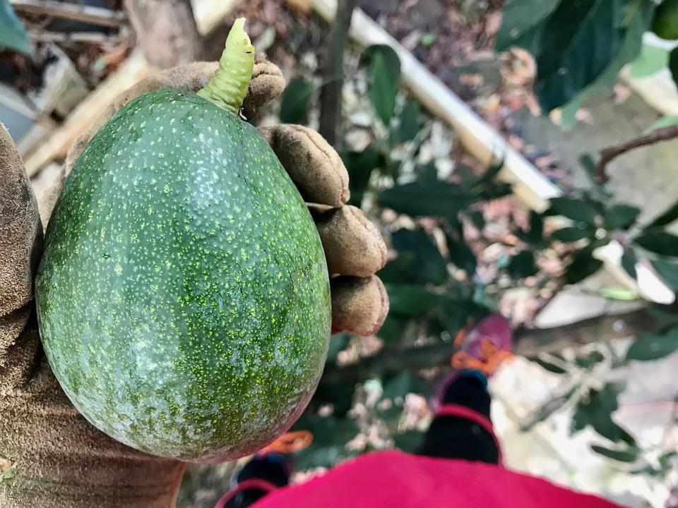 Food, Fruit, Nature, Plant, Vegetable, Healthy