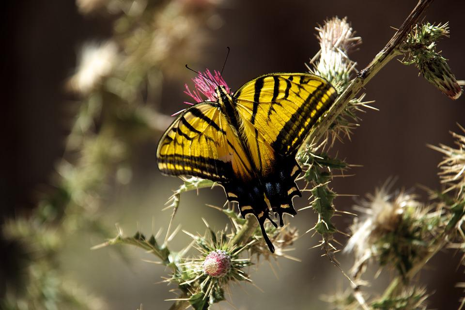 Butterfly, Nature, Insect, Plant