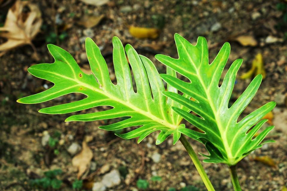 Leaf, Plant, Nature, Garden, Environment, Outdoor