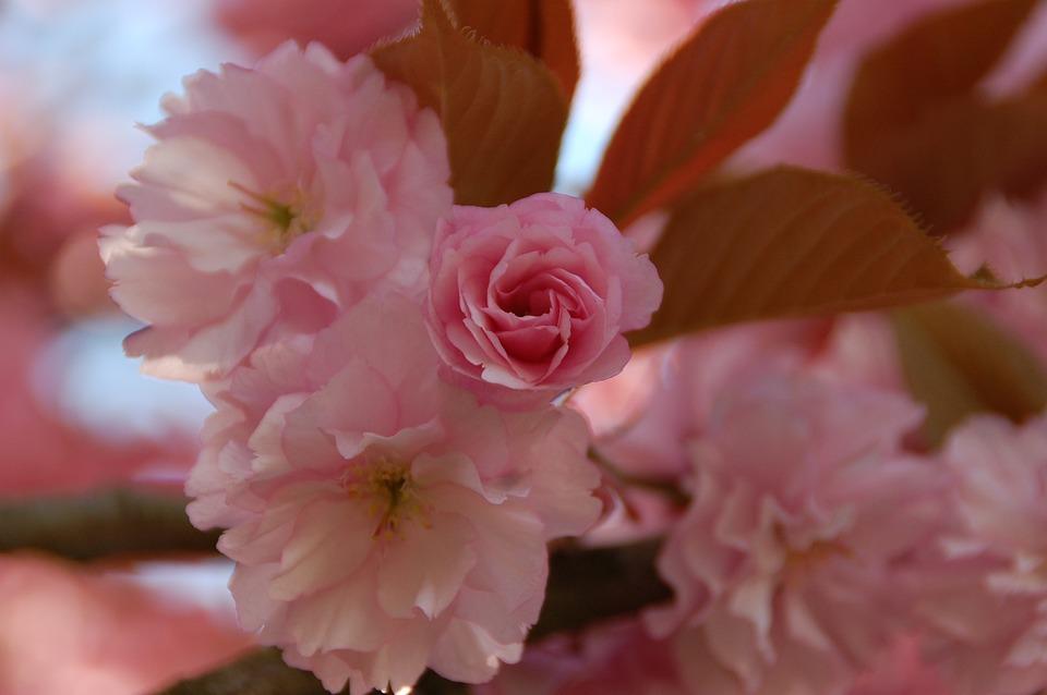 Flower, Plant, Nature, Leaf