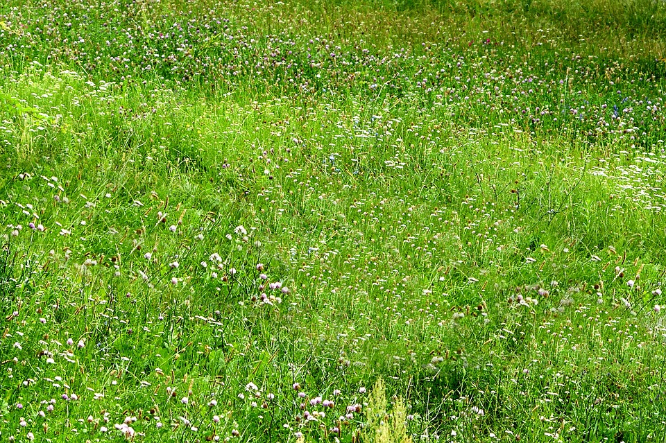 Grass, Green, Nature, Plant, Meadow, Summer