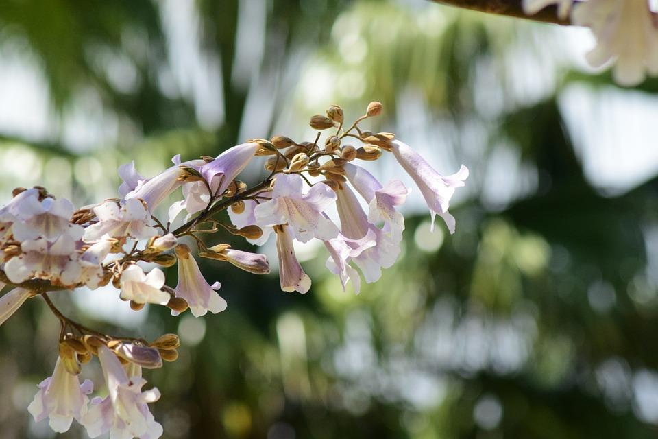 Closeup, Nature, Natural, Color, Plant, Outdoor, Fresh