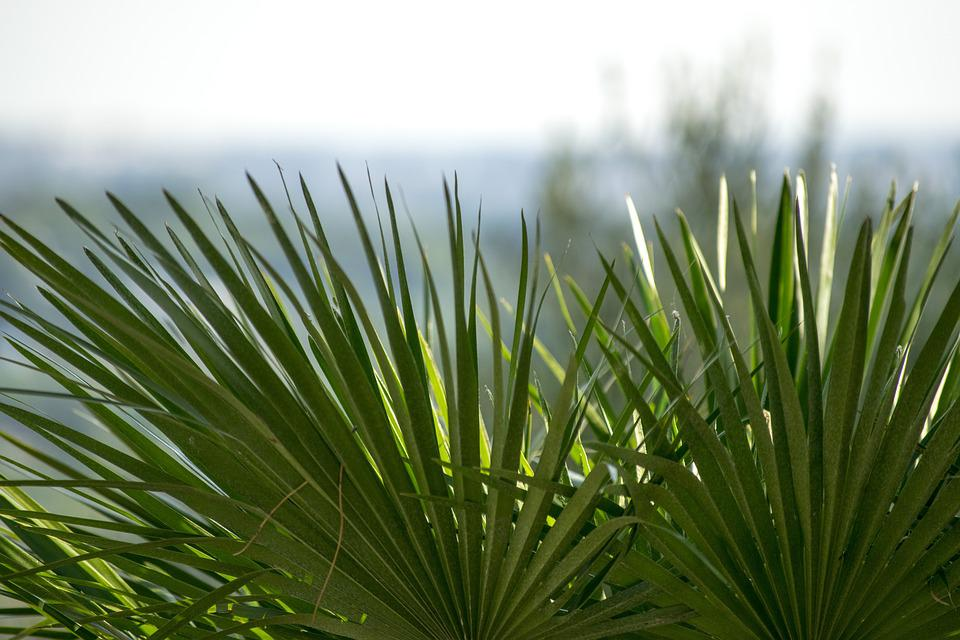 Plant, Focus, Plants, Nature, Green, Palma, Spring