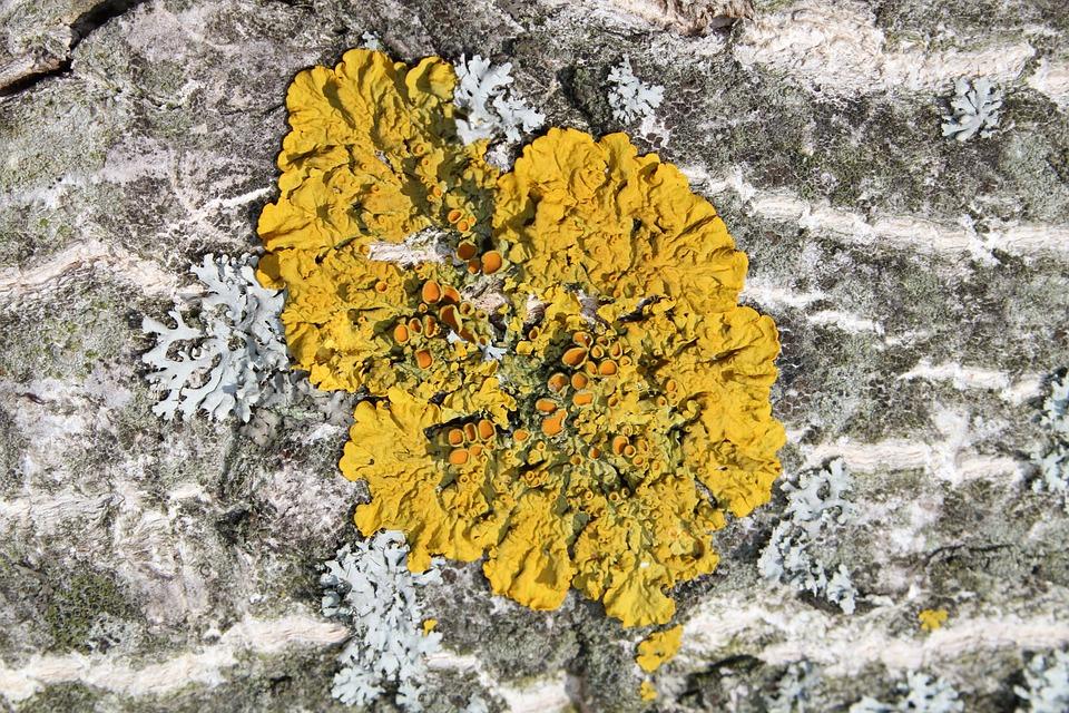 Nature, Background, Rock, Tree, Plant