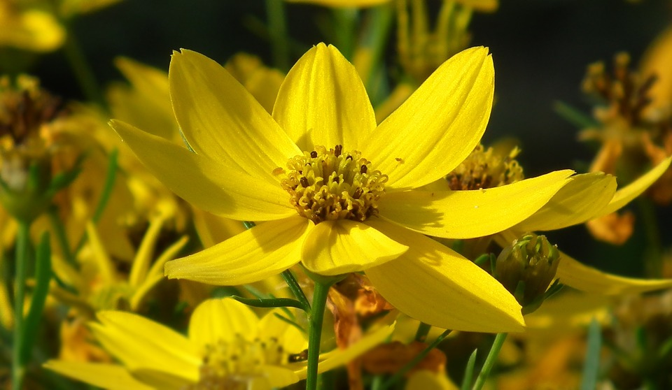 Nature, Flower, Yellow, Plant, Summer, Leaf, The Petals