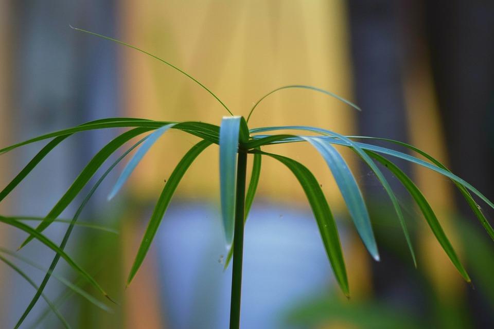 Nature, Plant, Leaf, Summer