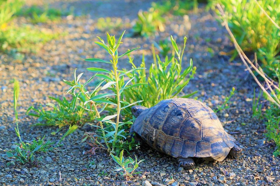 Tortoise, Nature, Animal, Wild, Rural, Plant, Ot
