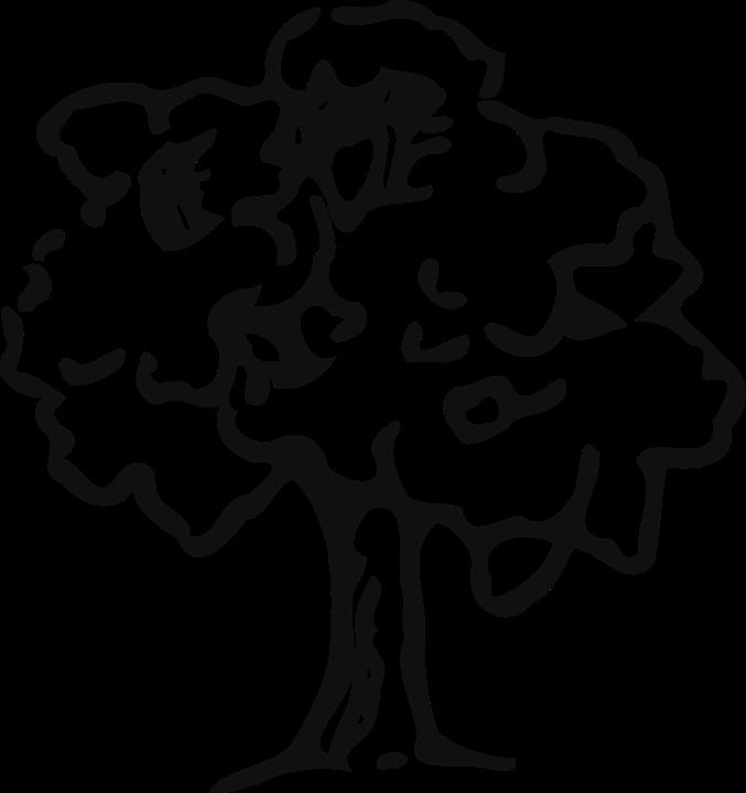 Tree, Trunk, Plant, Nature