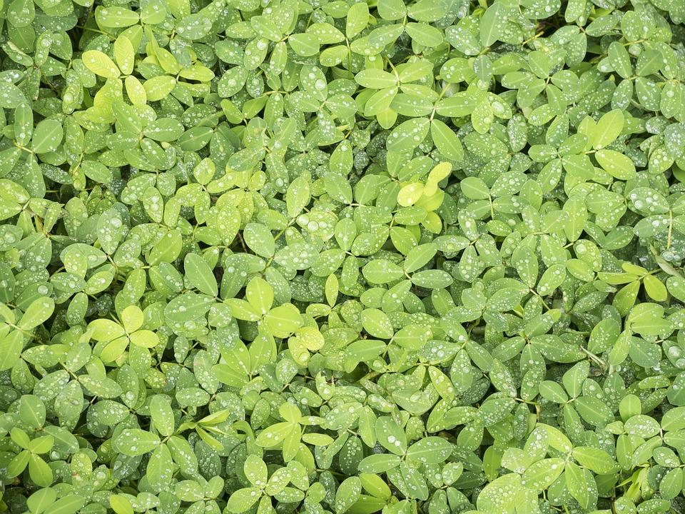 Free photo Nature Plant Wallpaper Leaf Garden - Max Pixel