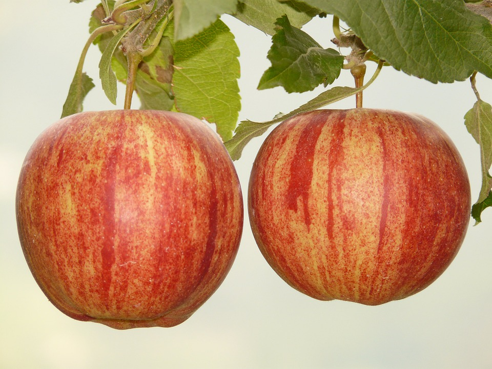 Apple, Fruit, Eat, Nature, Healthy, Red, Plantation