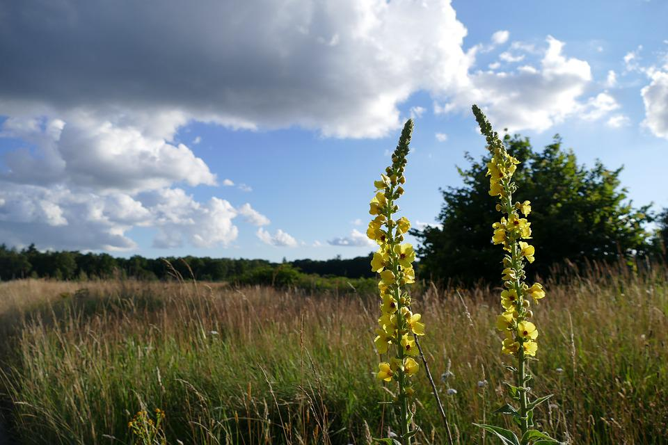 Field, Nature, Landscape, Plants, Colors, Flower