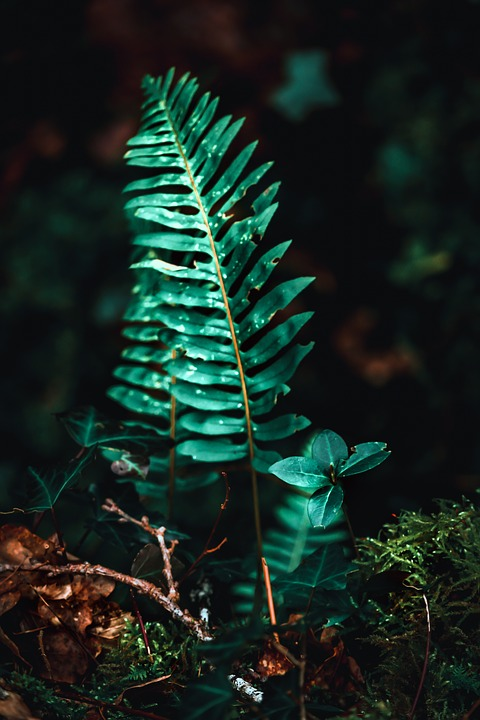 Fern, Green, Nature, Leaves, Plants, Texture