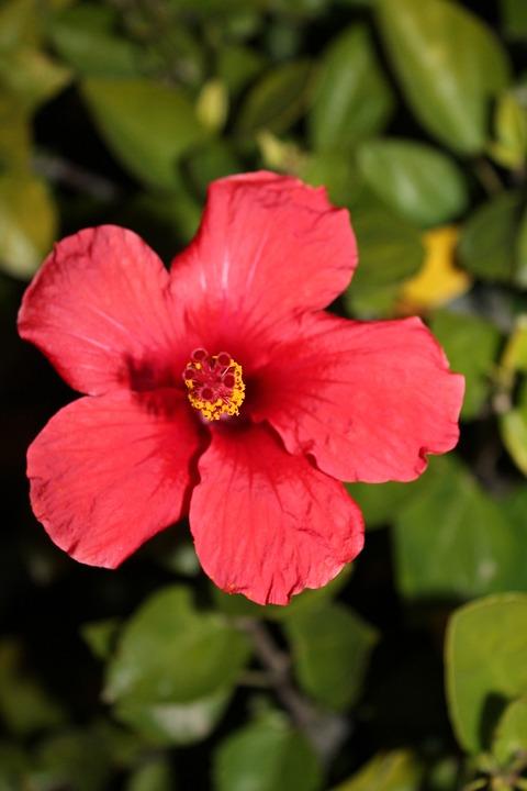 Flower, Nature, Garden, Flowers, Red, Orange, Plants