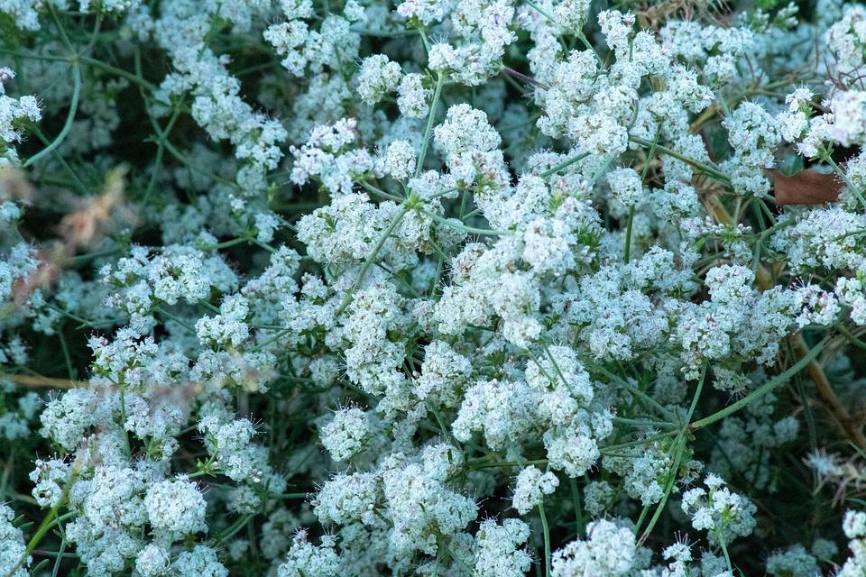 Flower, Meadow, Plants, Nature