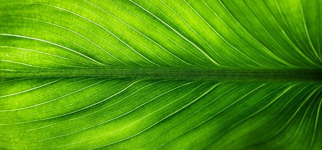 Leaf, Nature, Green, Plants, Veins, Translucent
