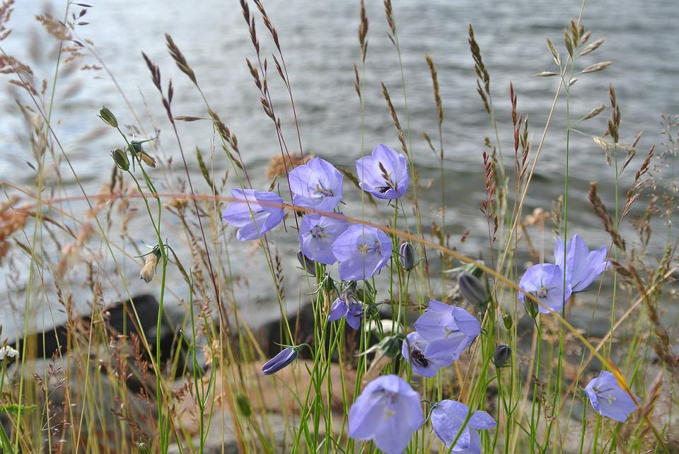 Flowers, Blue, Nature, Plant, Bloom, Pointed Flower