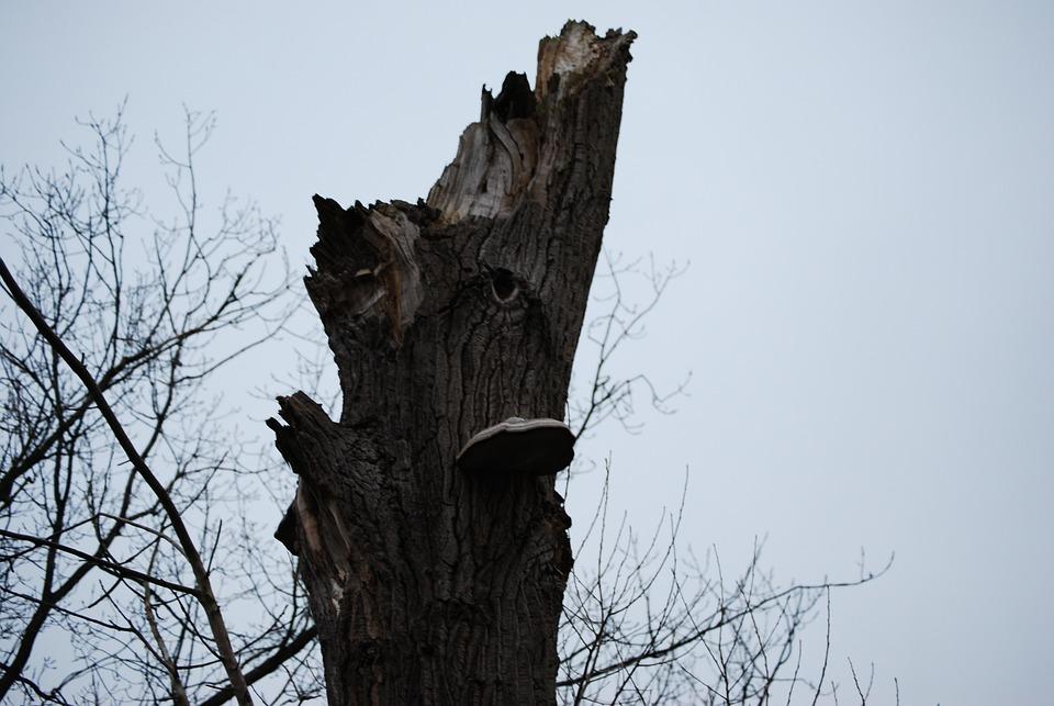 Tree, Nature, Winter, Pollard Willow, Abstract