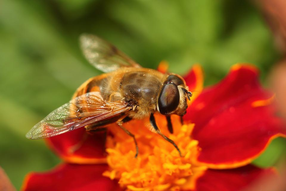 Nature, Insect, Bee, Flower, Pollen