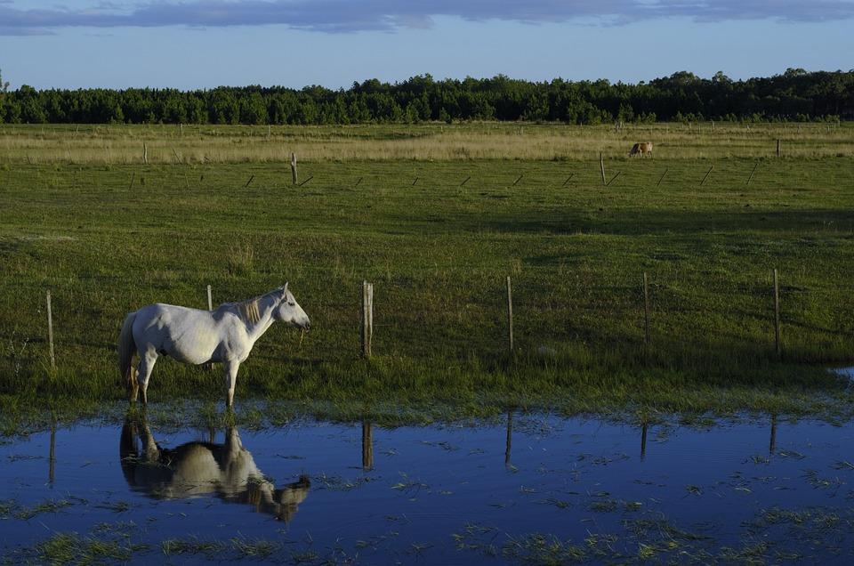 Horse, Pond, Field, Reflection, Nature, Landscape
