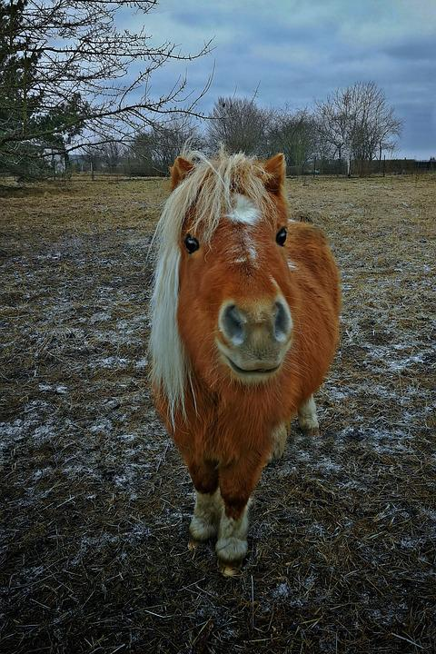 Horse, Hdr, Small, Pony, Brown, Animal, Cute, Nature