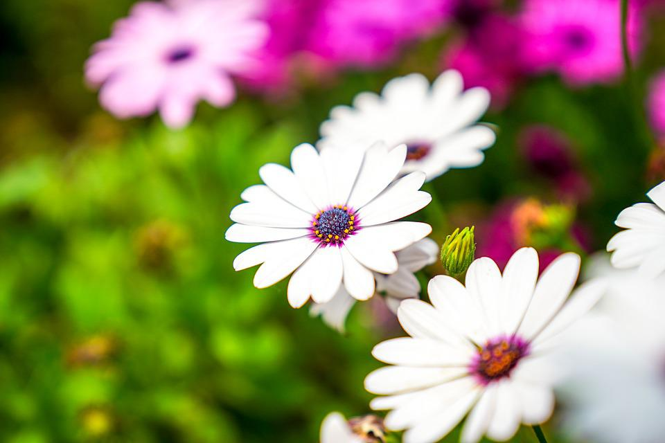 Free Photo Nature Pool Plants White Flowers Green Flower Max Pixel
