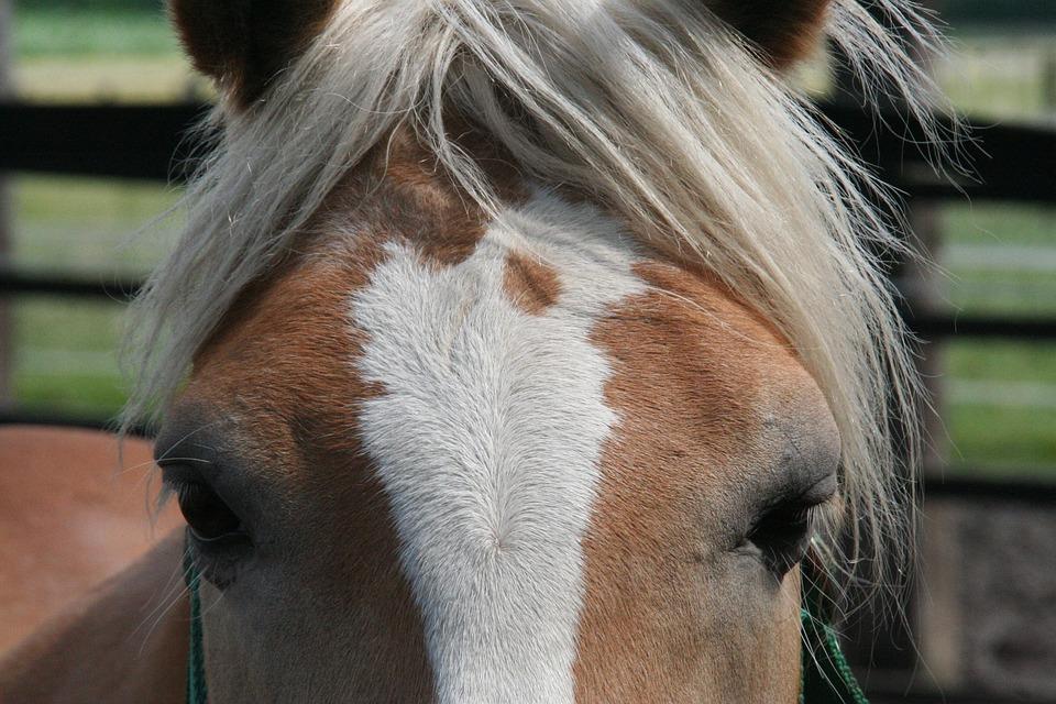 Horse, Horse Head, Animal, Portrait, Nature, Farm, Mane