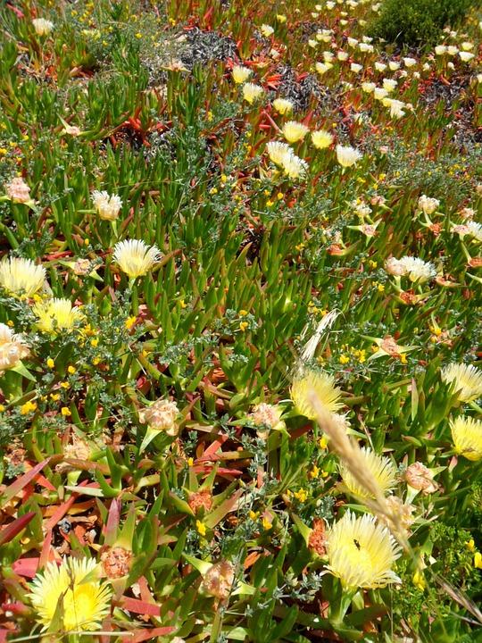 Portugal, Algarve, Plant, Nature