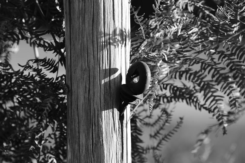 Post, Wood, Nature, Closing, Metal, Ring, Rural