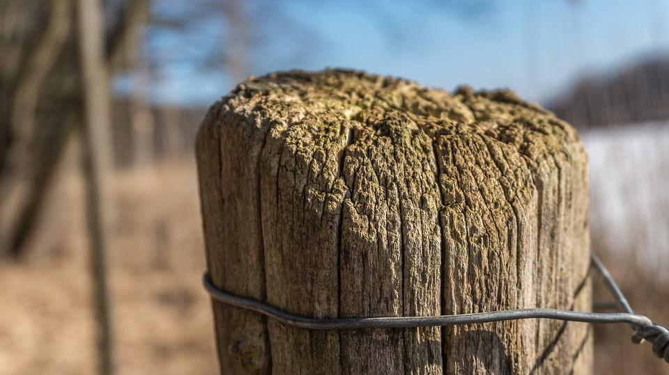 Nature, Pile, Wire, Wood, Wood Pile, Post, Wooden Posts