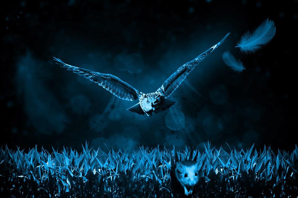 Owl, Mouse, Hunt, Night, Nature, Hunter, Predator