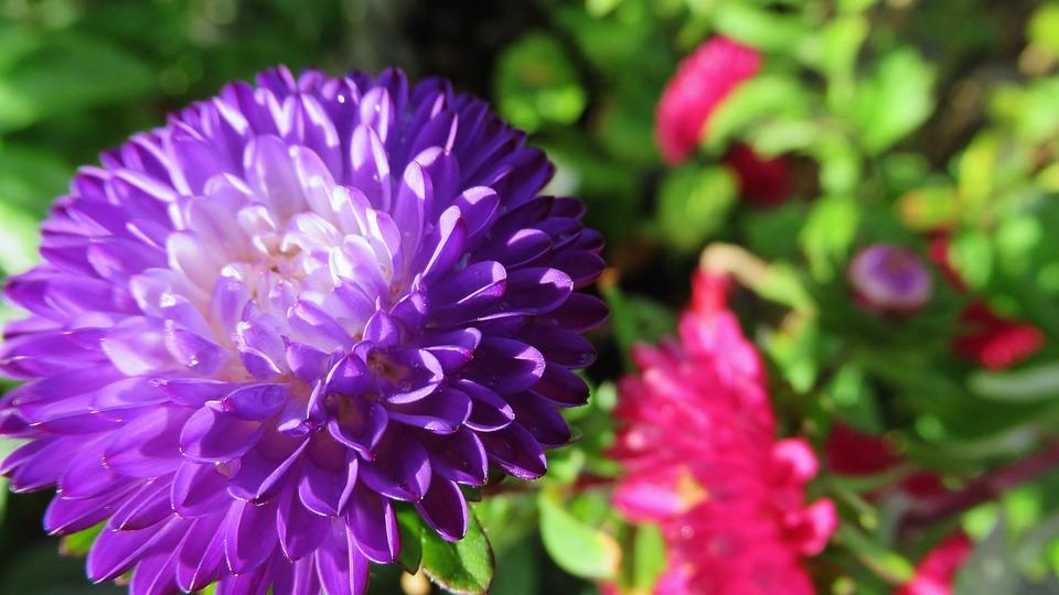 Flower, Purple, Bloom, Nature