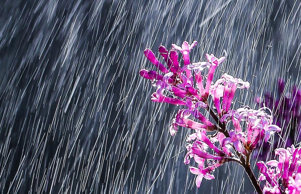 Nature, Flower, Rain, Beautiful Flower, Of Course