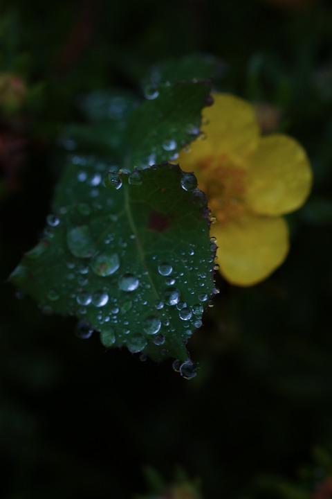 Flower, Leaf, Water Drop, Rain Drop, Nature