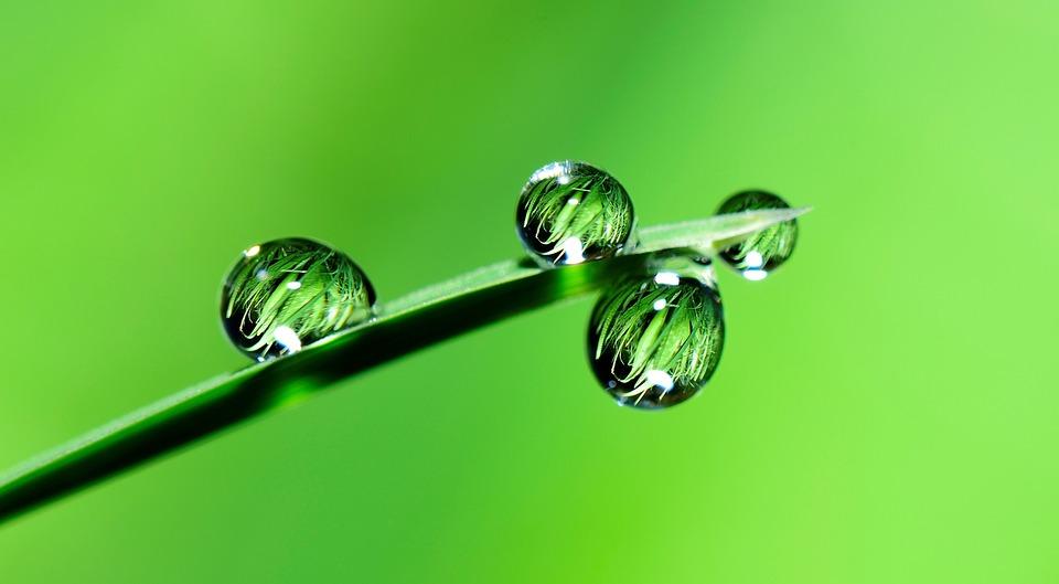 Water, Drops, Grass, Rain, Nature, Wet, Fall, Plant