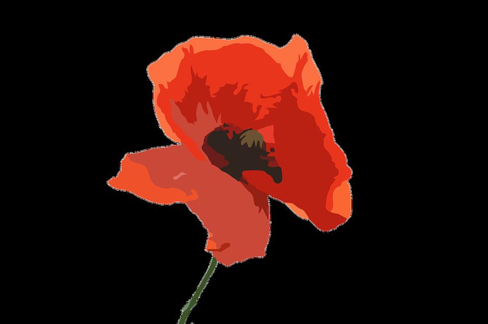 Poppy Flower, Flower, Purple, Red Flower, Nature