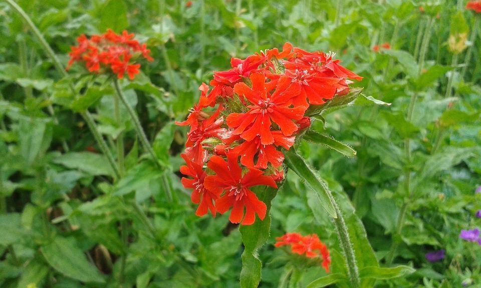 Red, Orange, Reddish Orange, Garden, Park, Nature