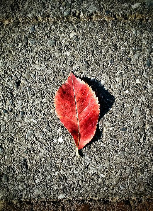 Leaf, Concrete, Red, Plant, Nature, Texture, Cement