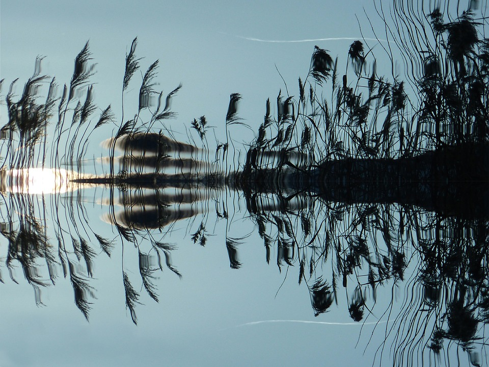 Reed, Water, Mirroring, Lake, Bank, Nature, Landscape