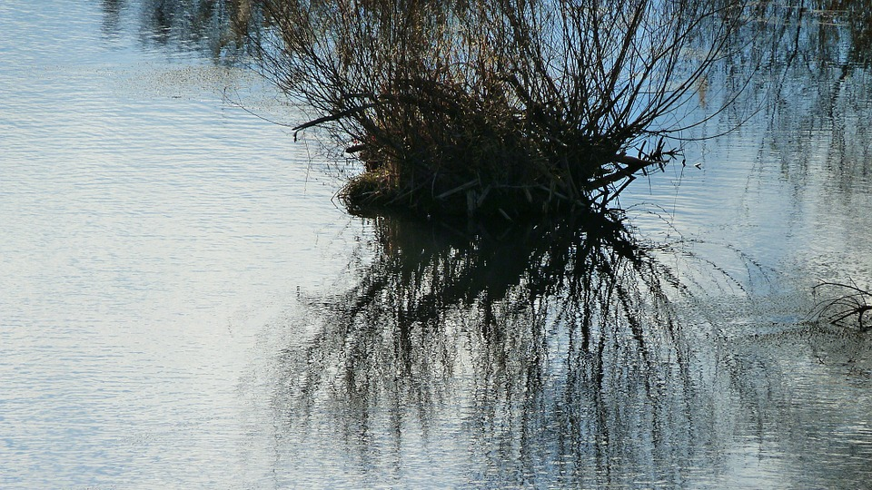Landscape, Nature, Water, Lake, Reflections, Branches