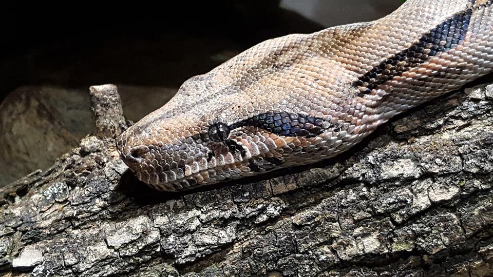 Reptile, Nature, Snake, Animal World