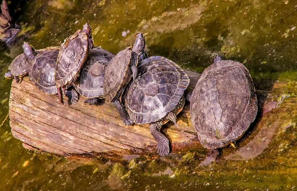 Nature, Zoo, Turtle, Animal, Reptile, Animal World
