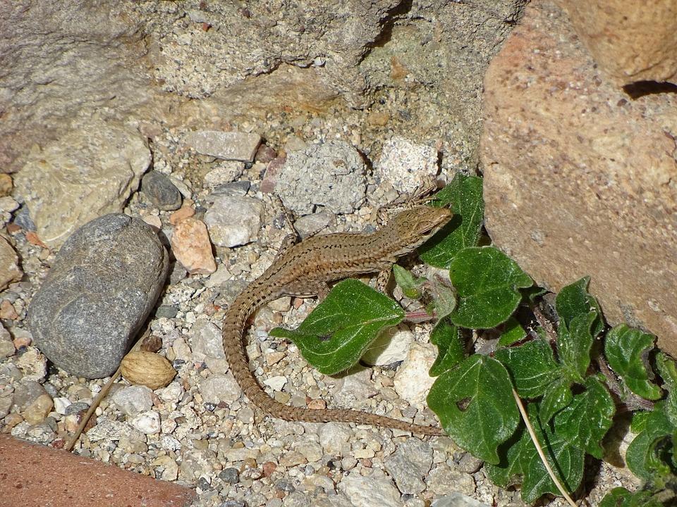 Nature, Animalia, Reptilia