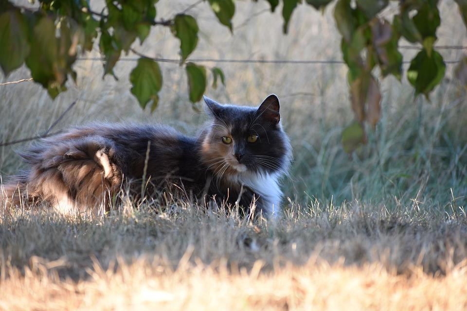 Cat, Closeup, Animals, Pet, Resting, Nature