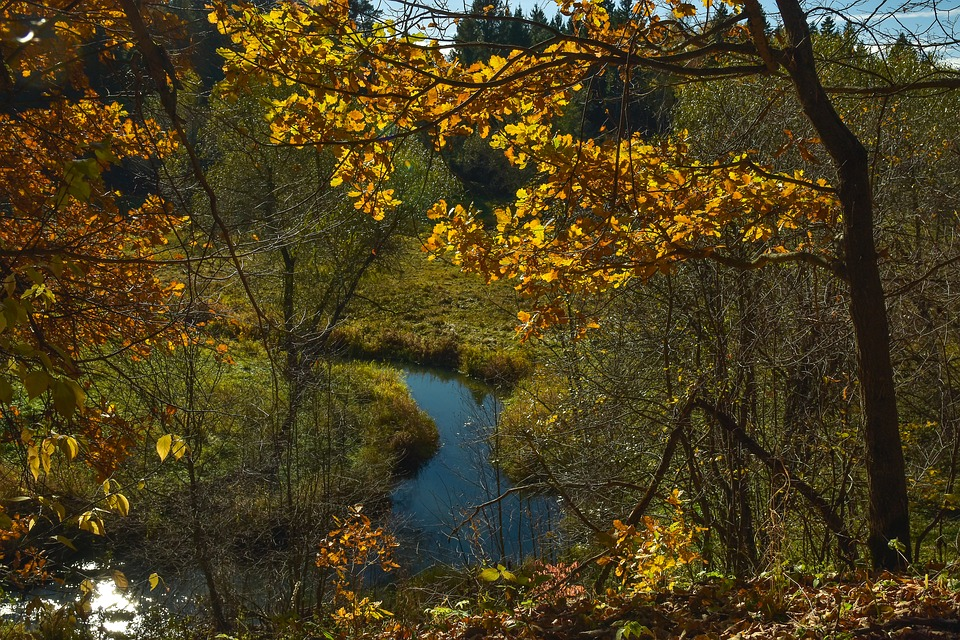 Autumn, Nature, Landscape, River, Trees
