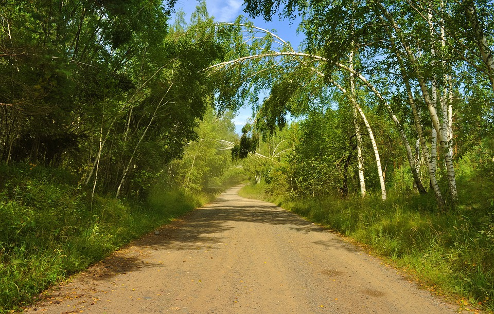 Road, Forest, Nature, Summer, Tree, Landscape, Arch
