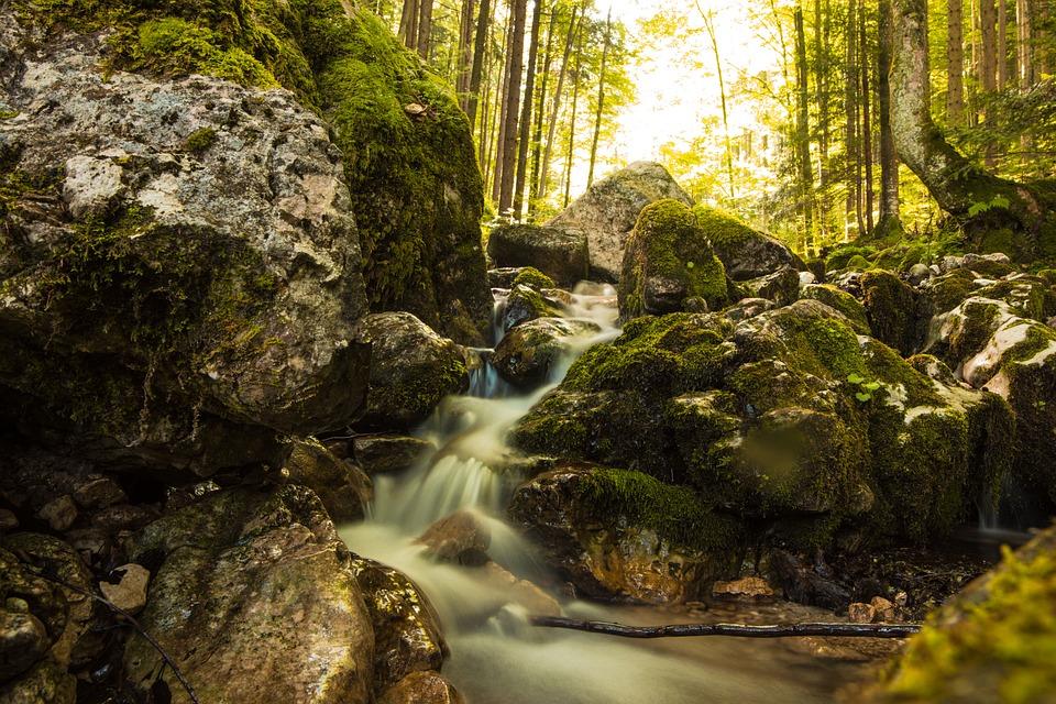 Forest, Rocks, Stream, Moss, Nature, Cascades, River