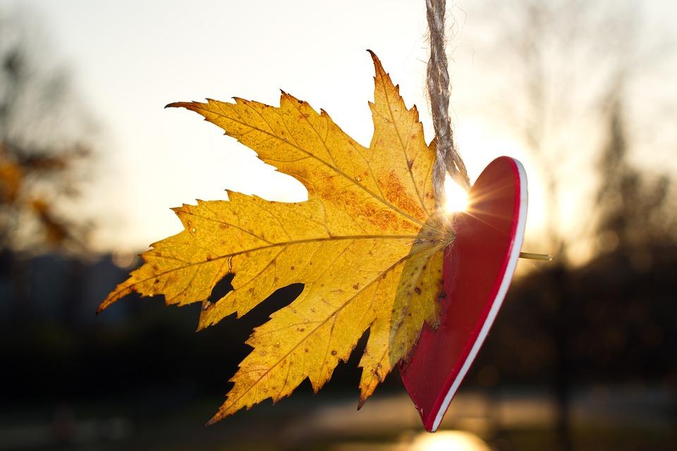 Heart, Autumn, Love, Nature, Romantic, Deco, Romance